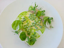 Cod with peas and sprouts and cream sauce Stock Image