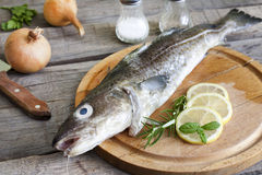 Cod raw fish on cutting board. In the kitchen with spices Royalty Free Stock Photography