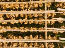 Cod stockfish drying on racks, Lofoten islands Norway stock images