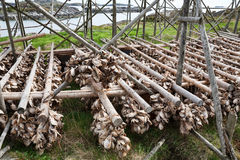 Cod stockfish Stock Photos