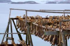 Cod stockfish.Industrial fishing in Norway Stock Photos