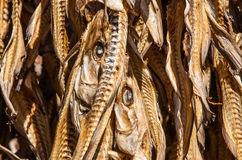 Cod Stockfish Royalty Free Stock Photo
