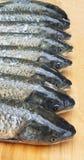 Coda capa dei pesci Fotografia Stock Libera da Diritti