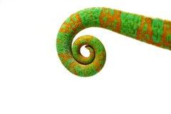 Coda del Chameleon della pantera Fotografie Stock