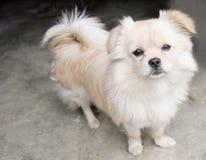 Coda del cucciolo in su Immagine Stock
