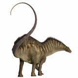 Coda del dinosauro del Amargasaurus Fotografia Stock Libera da Diritti