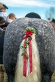 Coda di cavallo decorata pronta ad eseguire alla parata di leonhardi immagine stock libera da diritti