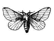 Coda di rondine della farfalla del tatuaggio di schizzo Fotografia Stock