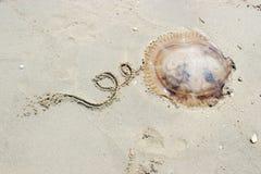 coda di tiraggio della mano per la medusa fotografia stock libera da diritti
