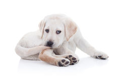 Coda divertente del cane Fotografia Stock Libera da Diritti