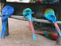 Code dei pappagalli colourful immagini stock
