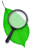 Coded green leaf Stock Image