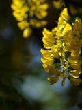 Codeso de las flores fotografía de archivo libre de regalías