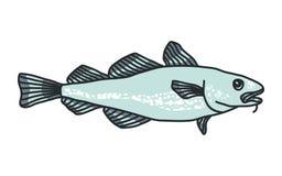 Codfish Royalty Free Stock Images