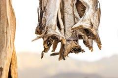 Codfish wieszali na drewnianych kijach być susi obraz royalty free