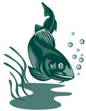 Codfish woodcut style. Vector art on fishes and other marine life Stock Photos