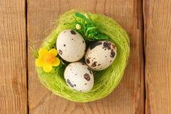 Codornices del huevo la jerarquía verde Foto de archivo