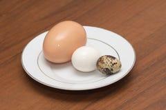 Codornices egg Foto de archivo libre de regalías