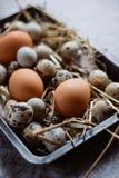 Codorniz cruas, ovos da galinha na placa preta, conceito de easter, fundo concreto escuro imagem de stock