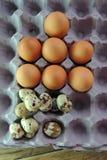 Codorniz e ovos da galinha na bandeja Imagem de Stock