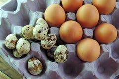 Codorniz e ovos da galinha na bandeja Fotos de Stock Royalty Free