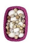Codorniz e ovos da galinha na cesta roxa Imagens de Stock