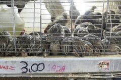 Codorniz nas gaiolas para a venda Imagem de Stock Royalty Free