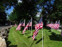 A celebration of US Stars and Stripes flags in a park in Cody. royalty free stock image