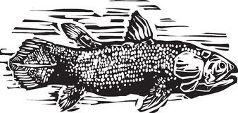 Coelacanth Foto de Stock Royalty Free