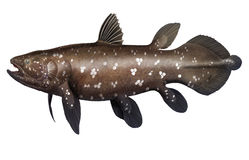 Coelacanth Stock Foto's