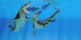 Tylosaurus Marine Reptiles. Coelacanth fish become prey to a pair of Tylosaurus marine reptiles in the Western Interior Seaway of North America Stock Photos