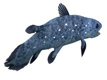Coelacanth Fish Tail. The Coelacanth fish was thought to be extinct but was found to be a living species in present times stock illustration