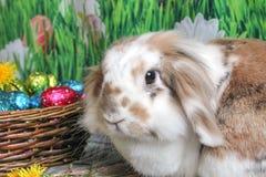 Coelhinho da Páscoa, coelho bonito com uma cesta dos ovos da páscoa imagens de stock royalty free