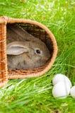 Coelhinho da Páscoa com os ovos na cesta Fotos de Stock