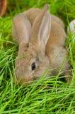 Coelhinho da Páscoa com os ovos na cesta Imagem de Stock