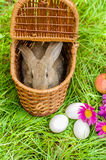 Coelhinho da Páscoa com os ovos na cesta Fotografia de Stock