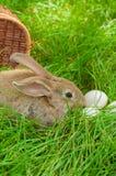 Coelhinho da Páscoa com os ovos na cesta Foto de Stock Royalty Free