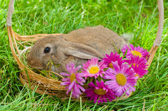 Coelhinho da Páscoa com os ovos na cesta Imagens de Stock Royalty Free