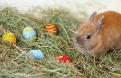 Coelhinho da Páscoa com os ovos pintados no feno imagens de stock royalty free