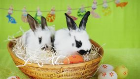 Coelhinho da Páscoa dois pequeno em uma cesta de vime filme