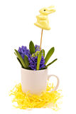 Coelhinho da Páscoa e jacintos Fotos de Stock Royalty Free