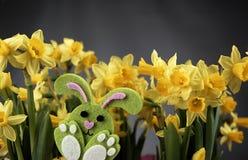 Coelhinho da Páscoa e narcisos amarelos amarelos Foto de Stock