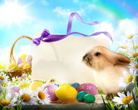Coelhinho da Páscoa e ovos da páscoa Fotos de Stock