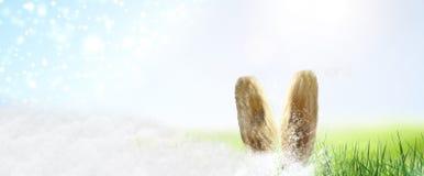 Coelhinho da Páscoa escondido na grama fotos de stock