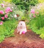 Coelhinho da Páscoa no jardim Imagem de Stock Royalty Free