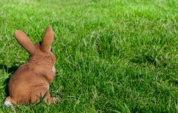 Coelhinho da Páscoa no prado com copyspace Fotos de Stock Royalty Free