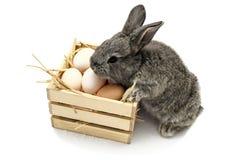 Coelhinho da Páscoa pequeno bonito com a caixa de madeira completa dos ovos da páscoa Fotografia de Stock