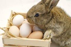 Coelhinho da Páscoa pequeno bonito com a caixa de madeira com ovos da páscoa Coelho do gengibre Fotos de Stock