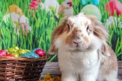 Coelhinho da P?scoa, coelho bonito com uma cesta dos ovos da p?scoa fotos de stock royalty free