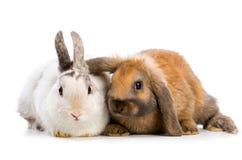 Coelhinhos da Páscoa Foto de Stock